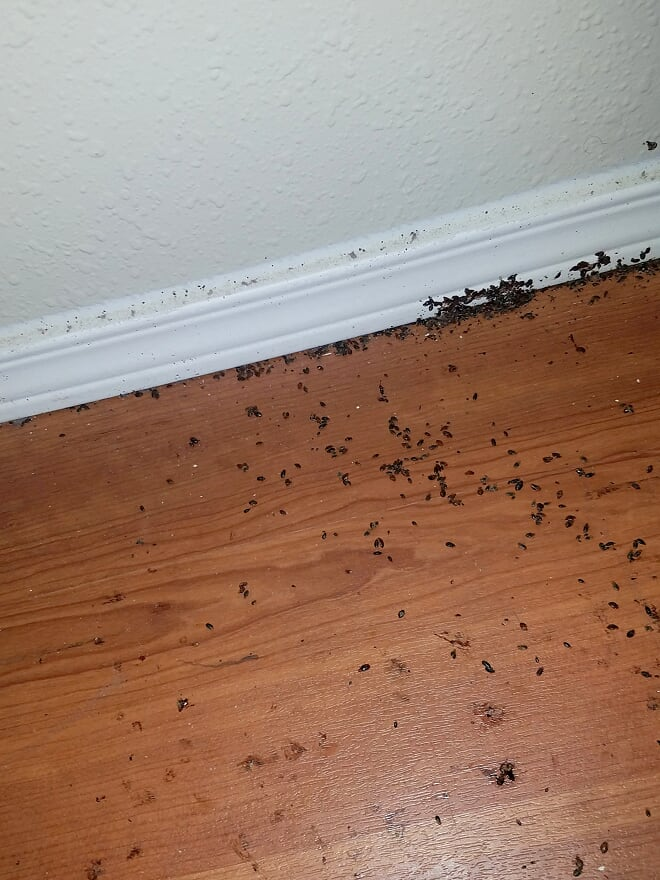 Home Pest Control of Chicago - point of interest    Photo 9 of 10   Address: 4415 W Madison St, Chicago, IL 60624, USA   Phone: (773) 570-2029