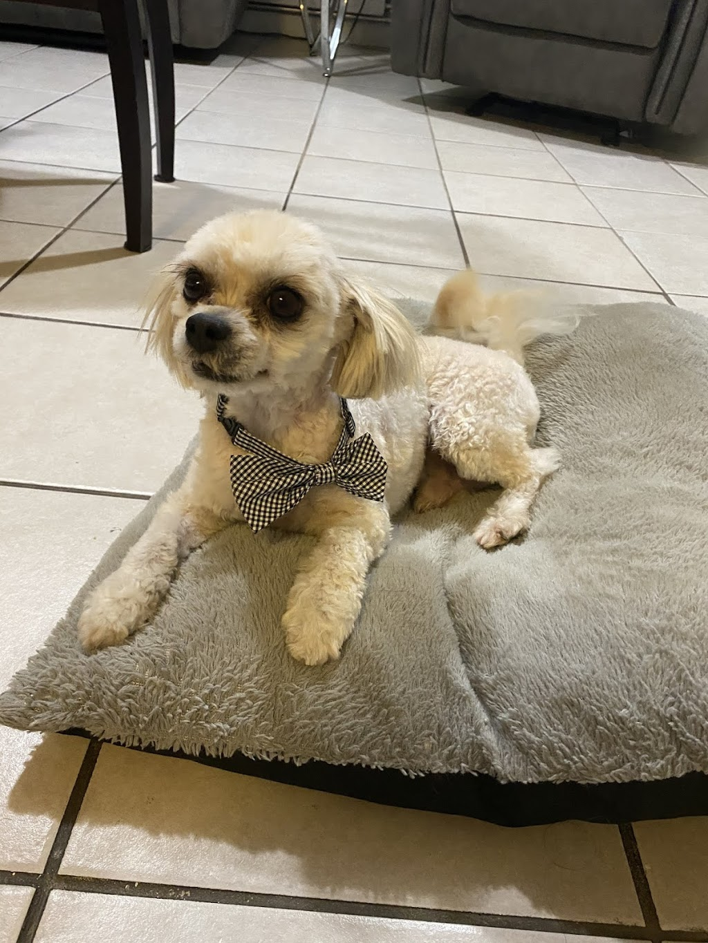 Pet Palace Boutique & Spa - point of interest  | Photo 1 of 3 | Address: 4901 W 14th St, Cicero, IL 60804, USA | Phone: (773) 920-8045